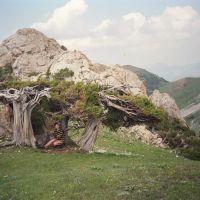 Djindy-Bel plateau, Язъяван