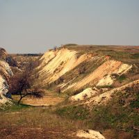 Вид на карьер где найденны араукарии, Алексеево-Дружковка