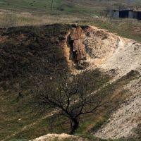 доисторическое дерево, Алексеево-Дружковка