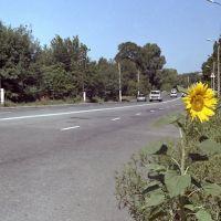 Трасса через Ал.Дружковку, Алексеево-Дружковка