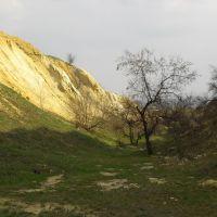 Каръер в Алексеево-Дружковке с окаменевшими деревьями, Алексеево-Дружковка