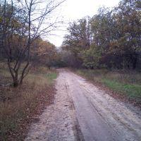 Лесная дорога, Амвросиевка