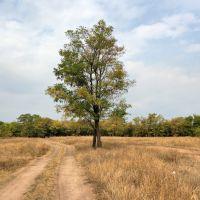 Дзержинск, дерево 3, Артемово