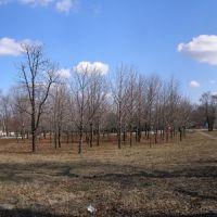 весна в верхнем парке, Артемовск