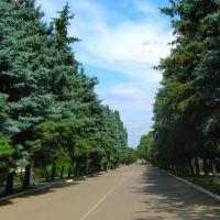 пр-кт.Гагарина, Великая Новоселка