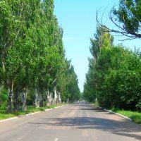 улица Интернациональная, Великая Новоселка