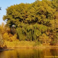 Красивый пейзаж., Гольмовский