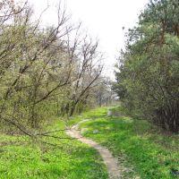 В лесничестве весной, Дзержинск