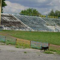 Стадион, Димитров