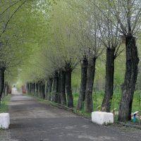 Яллея парка, Докучаевск