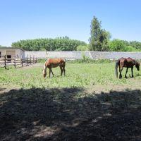 Лошади, Докучаевск