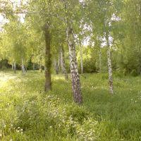 Березовая роща, Докучаевск