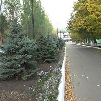 ул. Ленина, Донское