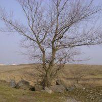 Дерево, Донское