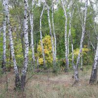 Дробышевское лесничество, Дробышево