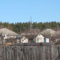 лес возле села, Дробышево
