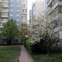 Ул Высоцкого 4, Жданов