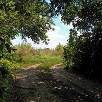 Луговая дорога, Зуевка