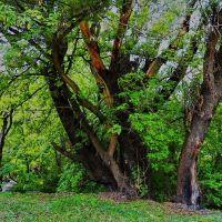 Деревья на Заречной, Карло-Марксово
