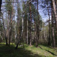 лес возле Медового, Кировск