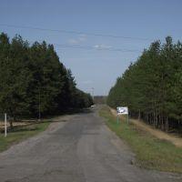 дорога к страусиной ферме, Кировск