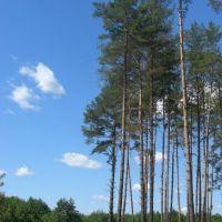 Вырубленный лес возле источника. Село Торское, Кировск