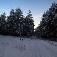 ..... по ёлки., Кировск