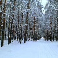 в лесу, Кировск