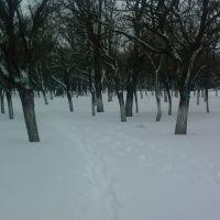 Зима в Новоазовске (возле военкомата), Новоазовск