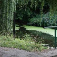 Андрющивка, парк перед дворцом Терещенко, август 09, Андрушевка