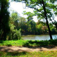 Парк в Андрушевке, Андрушевка