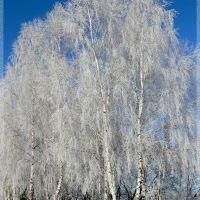 ♥ Зимние берёзы / Winter Birch, Барановка