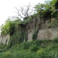 Зелений мур... - Green wall ..., Бердичев