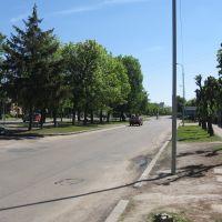 зелена алея, Бердичев