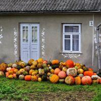 гарний врожай, good harvest, хороший урожай, Броницкая Гута
