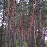 У лісі, Быковка