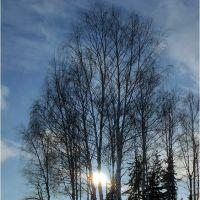 Зимние березки, Житомир