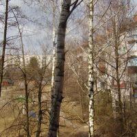 Двор Грушевского,74, Коростень
