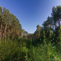 В лесу, Коростышев