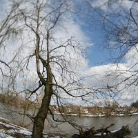Tree and fallen tree, Коростышев