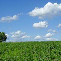 Field, Лугины