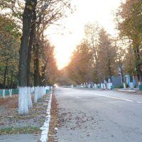 Main street- trees, Народичи