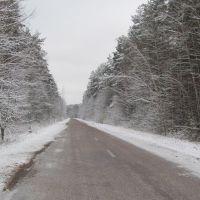 Трасса Т0608 в зимнем лесу, Народичи
