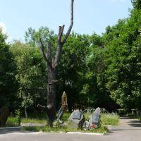 Сухое дерево - символ трагедии на ЧАЭС, Народичи