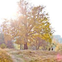 400 літній дуб, парк Перемоги, осінь, Новоград-Волынский