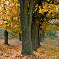 Залишки парку Мезенцевих, осінь, Новоград-Волынский