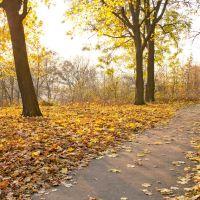 Доріжка в парку Перемоги, осінь, Новоград-Волынский