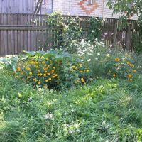 flowers in my yard, Радомышль