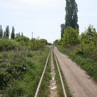 Narrow Gage Railway, Берегово