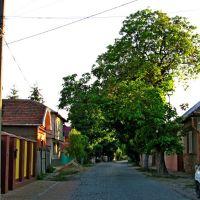 Улица Шевченко в Берегово., Берегово